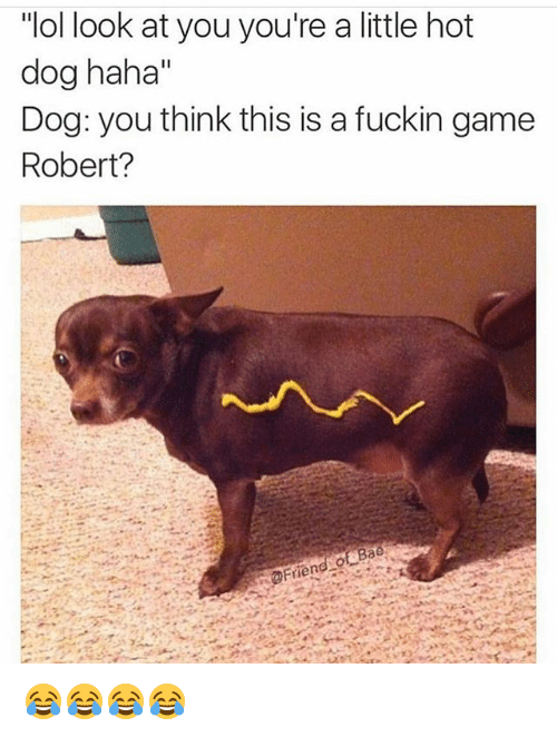 """Bae, Funny, and Game: """"ol look at you you're a little hot  dog haha""""  Dog: you think this is a fuckin game  Robert?  Bae 😂😂😂😂"""