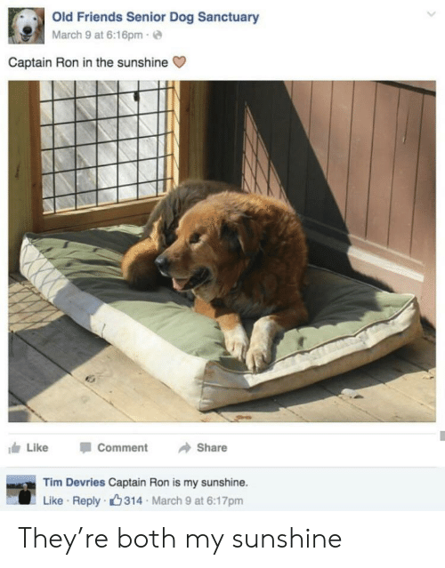Friends, Old, and March 9: Old Friends Senior Dog Sanctuary  March 9 at 6:16pm-  Captain Ron in the sunshine  Like  Comment  Share  Tim Devries Captain Ron is my sunshine.  Like Reply 314 March 9 at 6:17pm They're both my sunshine
