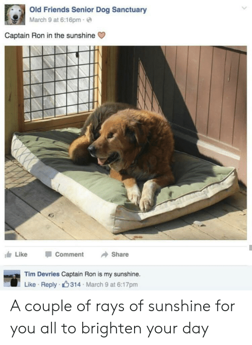 Friends, Old, and March 9: Old Friends Senior Dog Sanctuary  March 9 at 6:16pm-  Captain Ron in the sunshine  Like  Comment  Share  Tim Devries Captain Ron is my sunshine.  Like Reply 314 March 9 at 6:17pm A couple of rays of sunshine for you all to brighten your day