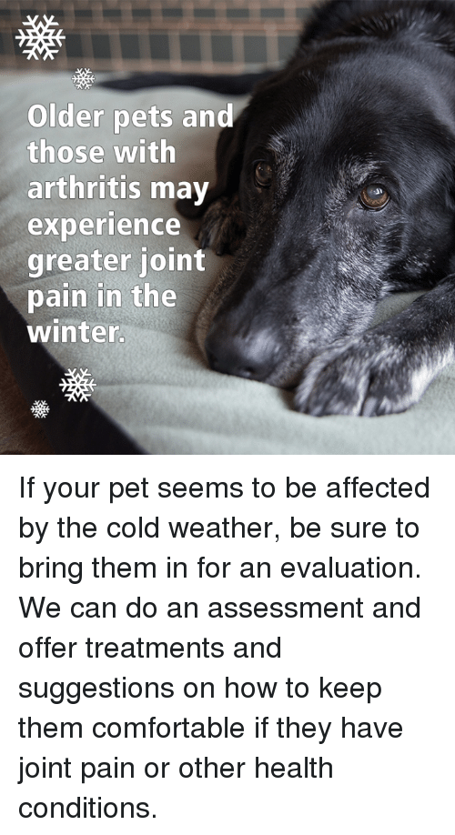 older pets and those with arthritis may experience greater joint 12763216 older pets and those with arthritis may experience greater joint