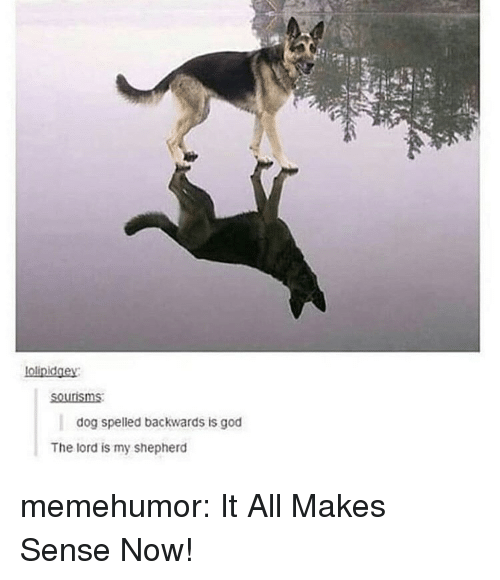 God, Tumblr, and Blog: olinidgey  sourisms  dog spelled backwards is god  The lord is my shepherd memehumor:  It All Makes Sense Now!