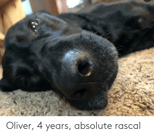 Rascal,  Years, and Oliver: Oliver, 4 years, absolute rascal