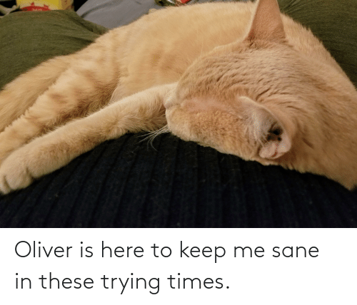Times, Sane, and Here: Oliver is here to keep me sane in these trying times.