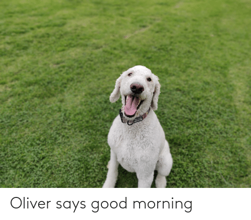 Good Morning, Good, and Morning: Oliver says good morning