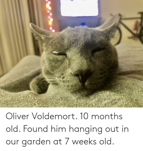 Old, Voldemort, and Him: Oliver Voldemort. 10 months old. Found him hanging out in our garden at 7 weeks old.