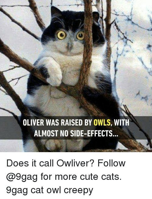 9gag, Cats, and Creepy: OLIVER WAS RAISED BY OWLS, WITH  ALMOST NO SIDE-EFFECTS. Does it call Owliver? Follow @9gag for more cute cats. 9gag cat owl creepy
