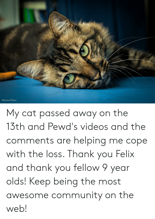 Community, Videos, and Thank You: Olivictor Photos My cat passed away on the 13th and Pewd's videos and the comments are helping me cope with the loss. Thank you Felix and thank you fellow 9 year olds! Keep being the most awesome community on the web!