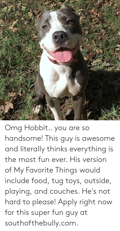 Food, Memes, and Omg: Omg Hobbit.. you are so handsome! This guy is awesome and literally thinks everything is the most fun ever. His version of My Favorite Things would include food, tug toys, outside, playing, and couches. He's not hard to please! Apply right now for this super fun guy at southofthebully.com.