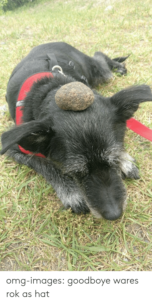 Omg, Tumblr, and Blog: omg-images:  goodboye wares rok as hat