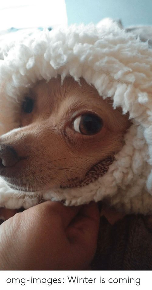 Omg, Tumblr, and Winter: omg-images:  Winter is coming