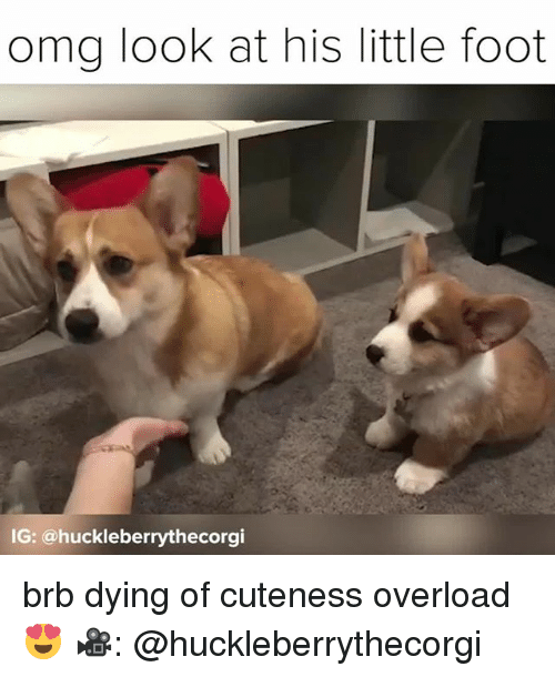 3952845bb Memes, Omg, and 🤖: omg look at his little foot G: @. brb dying of cuteness  overload ...
