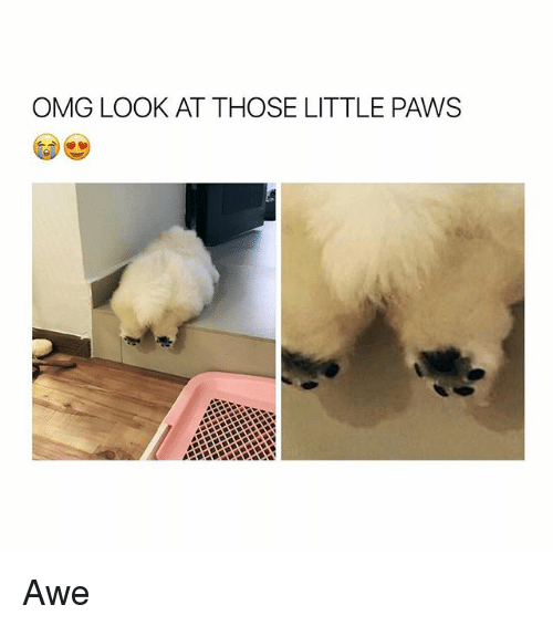 Omg, Girl Memes, and Look: OMG LOOK AT THOSE LITTLE PAWS Awe