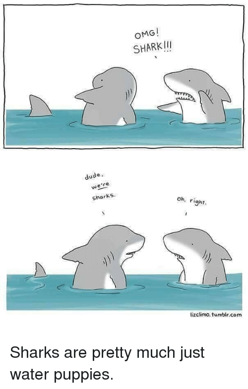 Dude, Omg, and Puppies: OMG!  SHARKII  dude,  we're  sharks  oh, right  lizclimo.tumblr.com <p>Sharks are pretty much just water puppies.</p>