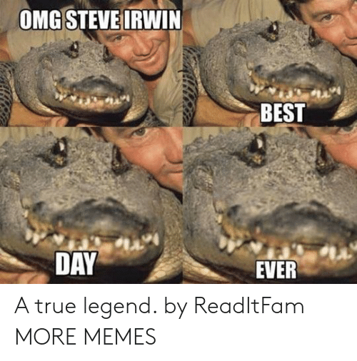 Dank, Memes, and Omg: OMG STEVE IRWIN  BEST  DAY  EVER A true legend. by ReadItFam MORE MEMES