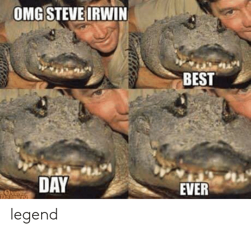 Omg, Steve Irwin, and Best: OMG STEVE IRWIN  BEST  DAY  EVER legend