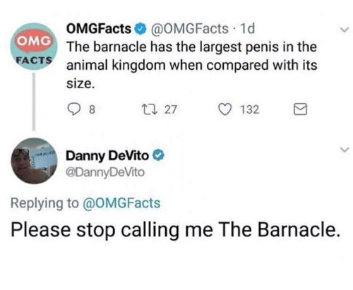 Facts, Omg, and Animal: OMGFacts@OMGFacts 1d  The barnacle has the largest penis in the  animal kingdom when compared with its  size.  OMG  FACTS  27  O 132  Danny DeVito  @DannyDeVito  Replying to @OMGFacts  Please stop calling me The Barnacle.