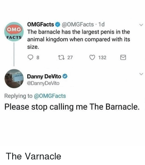 Facts, Omg, and Animal: OMGFacts@OMGFacts 1d  The barnacle has the largest penis in the  animal kingdom when compared with its  size  OMG  FACTS  t 27  O 132  Danny DeVito  @DannyDeVito  Replying to @OMGFacts  Please stop calling me The Barnacle. The Varnacle