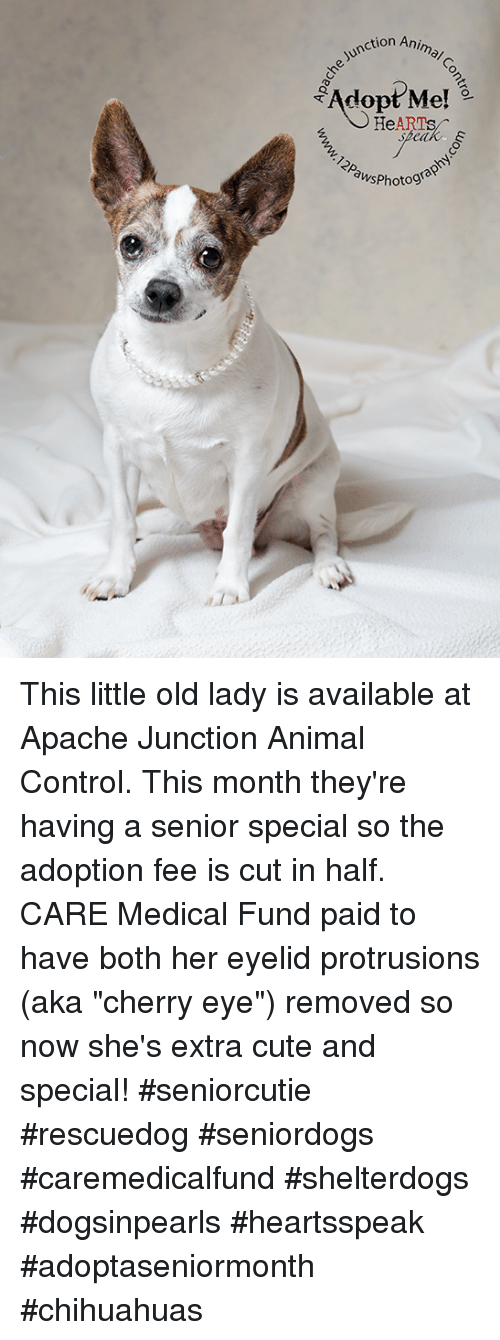 On Animal Adopt Me Hearts Speak Aws Hotograp This Little Old Lady