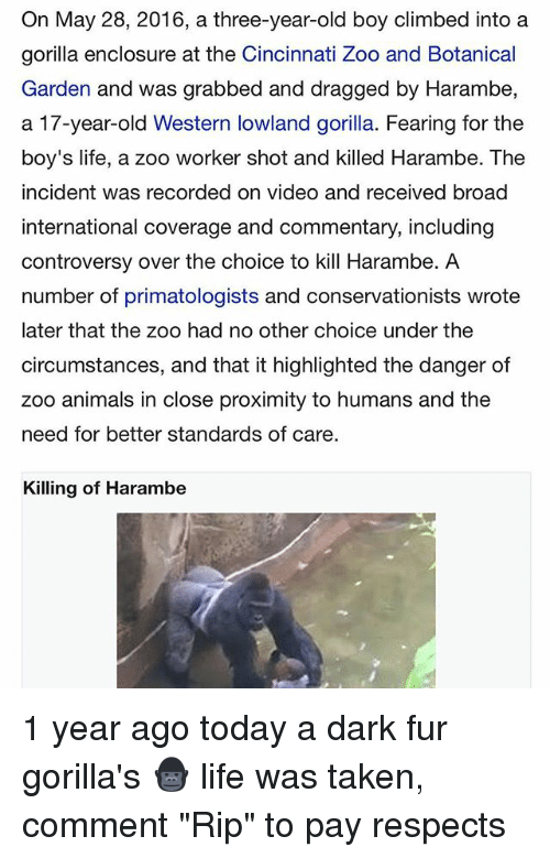 """Animals, Life, and Taken: On May 28, 2016, a three-year-old boy climbed into a  gorilla enclosure at the Cincinnati Zoo and Botanical  Garden and was grabbed and dragged by Harambe,  a 17-year-old Western lowland gorilla. Fearing for the  boy's life, a zoo worker shot and killed Harambe. The  incident was recorded on video and received broad  international coverage and commentary, including  controversy over the choice to kill Harambe. A  number of primatologists and conservationists wrote  later that the zoo had no other choice under the  circumstances, and that it highlighted the danger of  zoo animals in close proximity to humans and the  need for better standards of care  Killing of Harambe 1 year ago today a dark fur gorilla's 🦍 life was taken, comment """"Rip"""" to pay respects"""