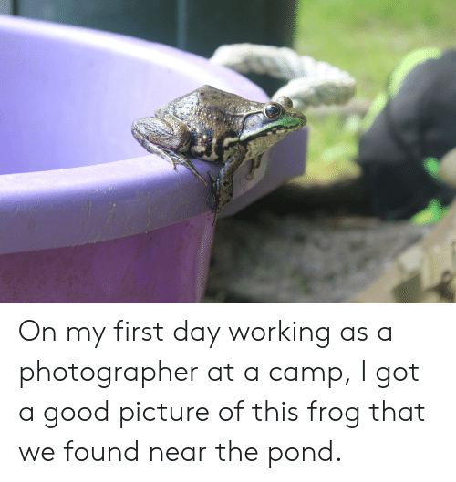 Good, Got, and Working: On my first day working as a photographer at a camp, I got a good picture of this frog that we found near the pond.