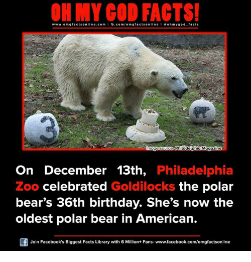 Memes, Bear, and Bears: ON MY GOD FACTS!  www.om facts online.com I fb.com  facts on  line ohm god facts  Philadelphia Magazine  mage Source  On December 13th, Philadelphia  Zoo celebrated  Goldilocks the polar  bear's 36th birthday. She's now the  oldest polar bear in American.  Join Facebook's Biggest Facts Library with 6 Million+ Fans- www.facebook.com/omgfactsonline