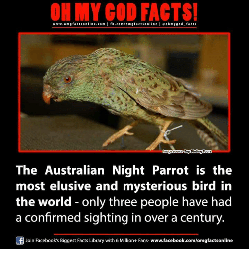 Facebook, Facts, and God: ON MY GOD FACTS!  www.om facts online.com I fb.com/o m g facts online I eohmygod facts  Top Birding Tours  The Australian Night Parrot is the  most elusive and mysterious bird in  the world only three people have had  a confirmed sighting in over a century  Join Facebook's Biggest Facts Library with 6 Million+ Fans- www.facebook.com/omgfactsonline