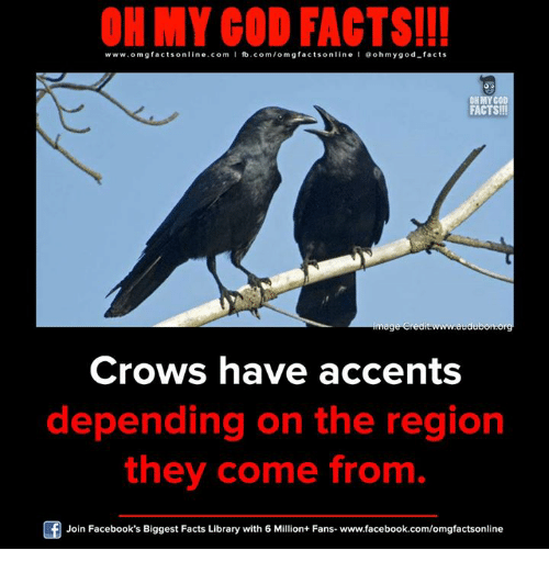 Facebook, Facts, and God: ON MY GOD FACTS!!!  www.omg facts online.com I fb.com/om gfacts online l ao hmygod-facts  FACTS!!!  mage credit www.audu  Crows have accents  depending on the region  they come from  Join Facebook's Biggest Facts Library with 6 Million+ Fans- www.facebook.com/omgfactsonline