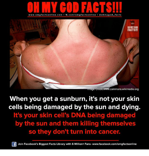 Facebook, Facts, and God: ON MY GOD FACTS!!!  www.omg facts online.com I fb.com/omg facts online I Goh my god-facts  OH MY GOD  FACTS!!  age eredit www.commons wikimedia org  When you get a sunburn, it's not your skin  cells being damaged by the sun and dying.  It's your skin cell's DNA being damaged  by the sun and them killing themselves  so they don't turn into cancer.  Join Facebook's Biggest Facts Library with 6 Million+ Fans- www.facebook.com/omgfactsonline