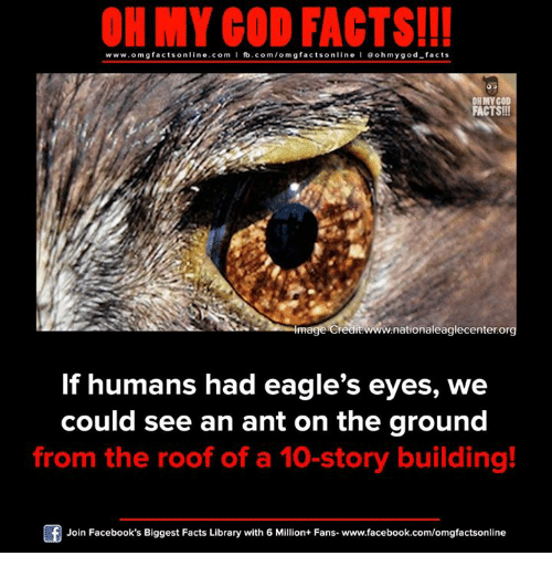 Philadelphia Eagles, Facebook, and Facts: ON MY GOD FACTS!!!  www.omg facts online.com I fb.com/omg facts online I Goh my god-facts  OHMYCOD  FACTS!!!  redit www.nationaleaglecenter.org  If humans had eagle's eyes, we  could see an ant on the ground  from the roof of a 10-story building!  Join Facebook's Biggest Facts Library with 6 Million+ Fans- www.facebook.com/omgfactsonline