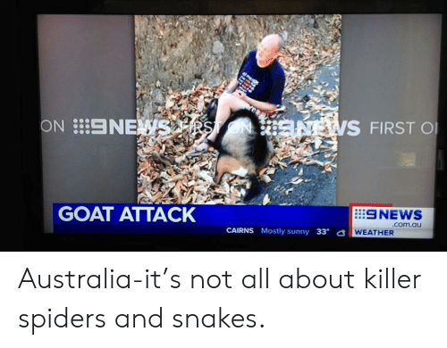 Funny, Goat, and Australia: ON NE  S FIRST O  GOAT ATTACK  SNEWS  CAIRNS Mostly sunny 33  WEATHER Australia-it's not all about killer spiders and snakes.