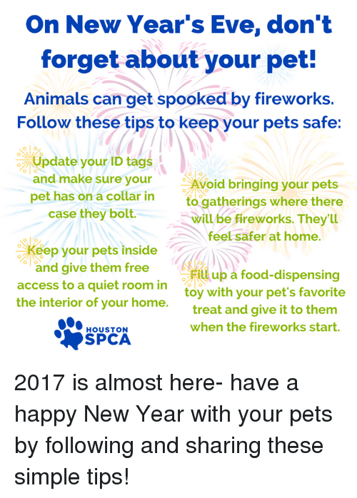 On New Year\'s Eve Don\'t Forget About Your Pet! Animals Can Get ...