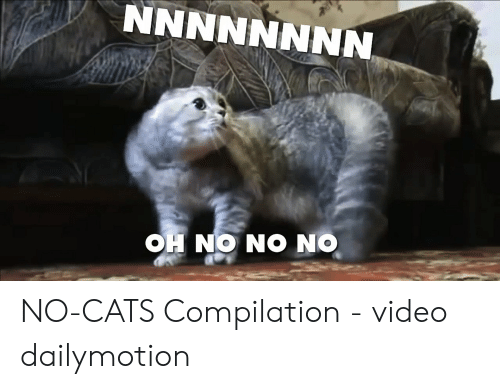 On ON ON HO NNNNNNNN NO-CATS Compilation - Video Dailymotion