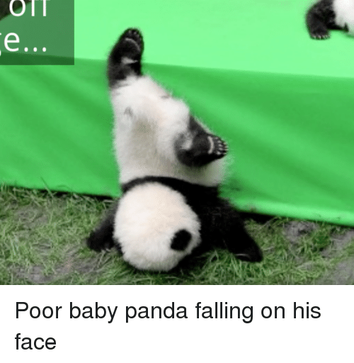 Baby Its Cold Outside Fall And Funny On Poor Baby Panda Falling