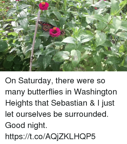 Memes, Good, and 🤖: On Saturday, there were so many butterflies in Washington Heights that Sebastian & I just let ourselves be surrounded.  Good night. https://t.co/AQjZKLHQP5