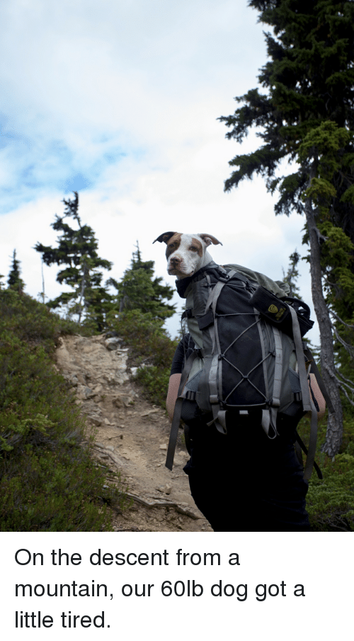 Got, Dog, and Descent: On the descent from a mountain, our 60lb dog got a little tired.