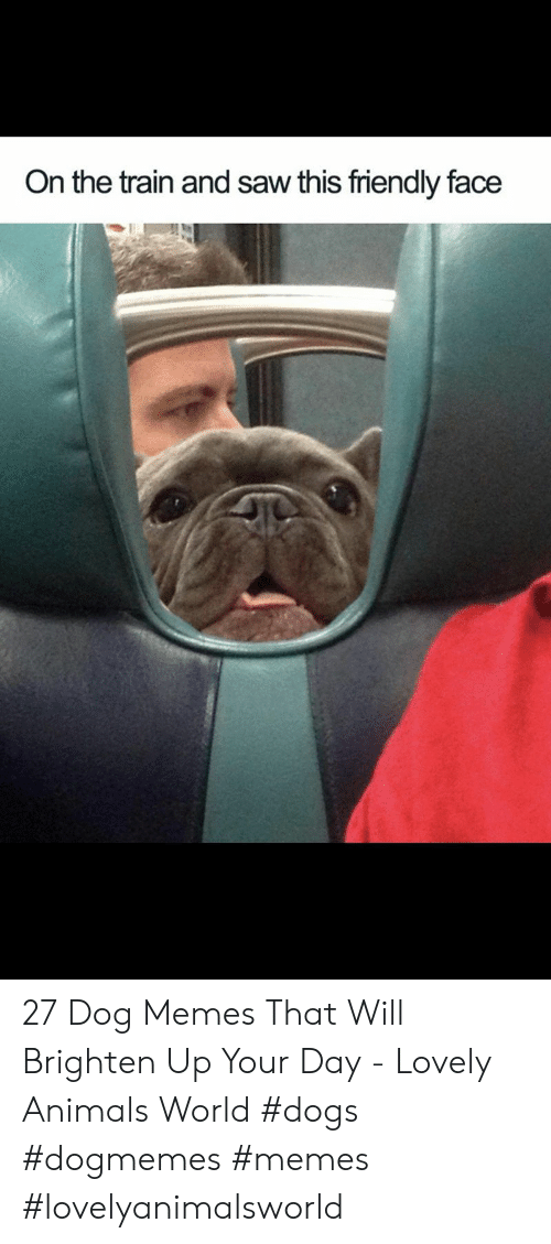 Animals, Dogs, and Memes: On the train and saw this friendly face 27 Dog Memes That Will Brighten Up Your Day - Lovely Animals World #dogs  #dogmemes #memes #lovelyanimalsworld