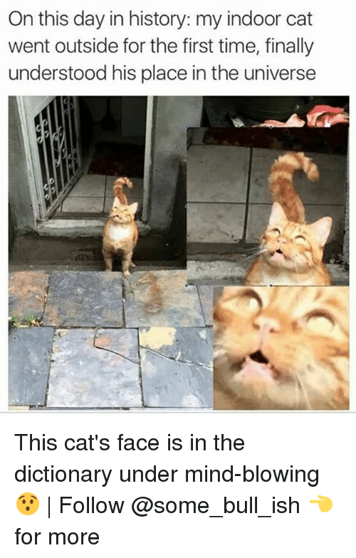 Cats, Memes, and Dictionary: On this day in history: my indoor cat  went outside for the first time, finally  understood his place in the universe This cat's face is in the dictionary under mind-blowing 😯 | Follow @some_bull_ish 👈 for more