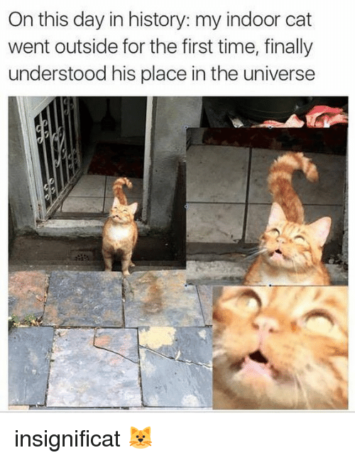 Memes, History, and Time: On this day in history: my indoor cat  went outside for the first time, finally  understood his place in the universe insignificat 🐱