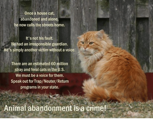 Animals, Anime, and Cats: Once a house cat,  abandoned and alone  he now calls the streets home.  It's not his fault.  He had an irresponsible guardian.  He's simply another victim without a voice.  There are an estimated 60 million  stray and feral cats in the U.S.  We must be a voice forthem.  Speak out for Trap/Neuter/Return  programs in your state.  Animal abandonment is a crime!