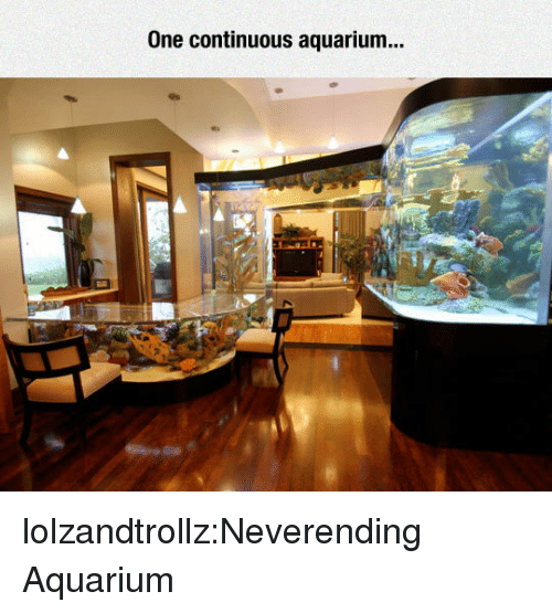 Tumblr, Aquarium, and Blog: One continuous aquarium.. lolzandtrollz:Neverending Aquarium