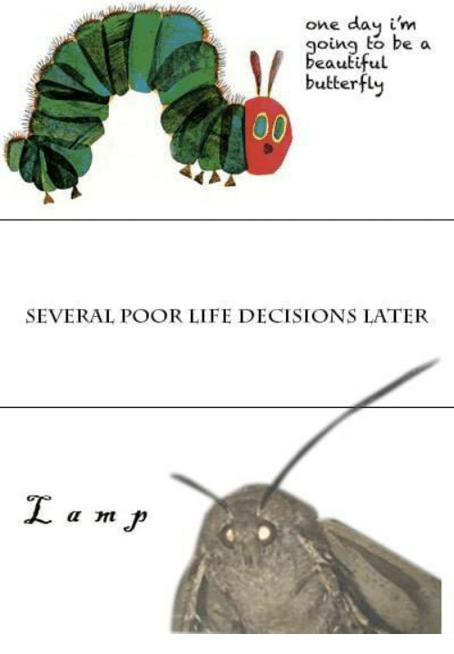 Life, Butterfly, and Decisions: one day i'm  oing to be a  eautiful  butterfly  SEVERAL POOR LIFE DECISIONS LATER