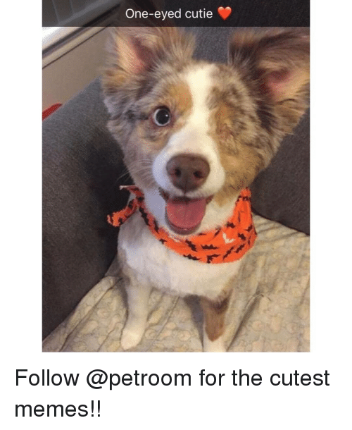 Memes, 🤖, and One: One-eyed cutie Follow @petroom for the cutest memes!!
