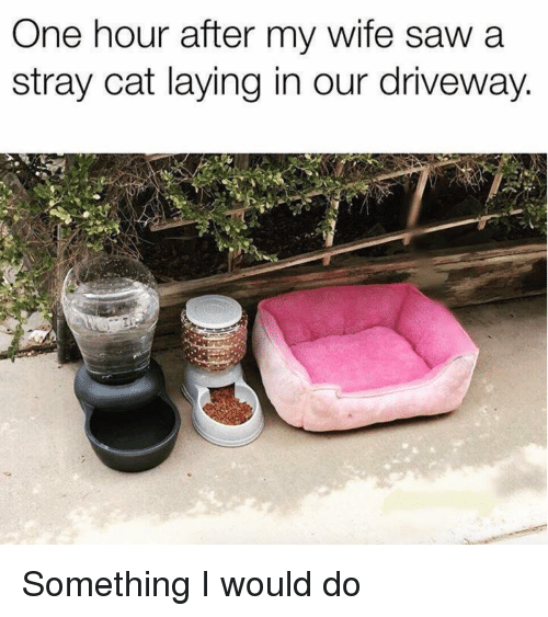 Saw, Wife, and Cat: One hour after my wife saw a  stray cat laying in our driveway. Something I would do