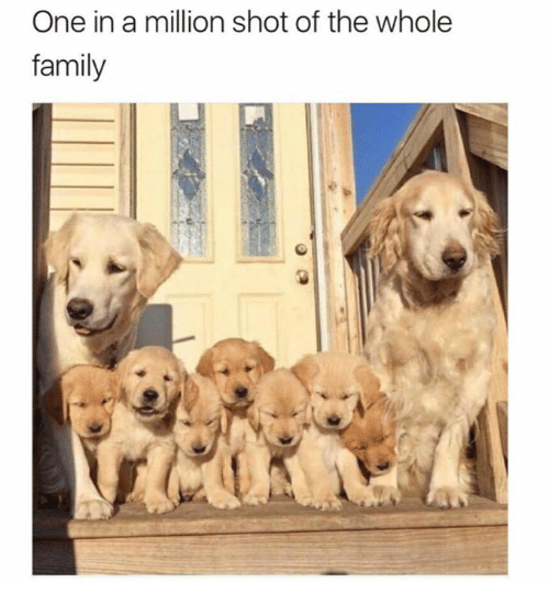 Dank, Family, and 🤖: One in a million shot of the whole  family