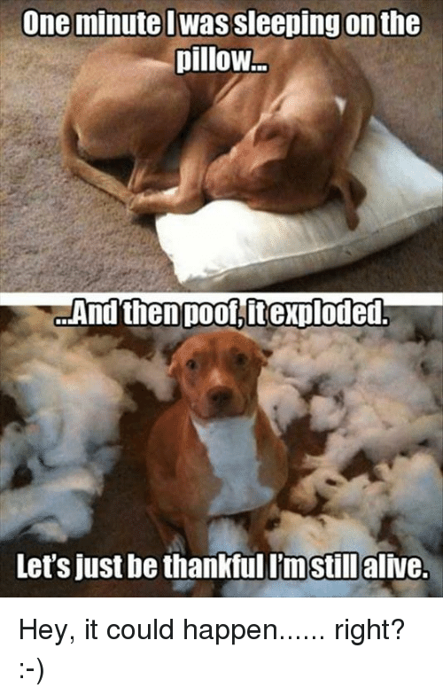 Memes, 🤖, and Pillow: One minute Wassleeping on the  pillow  And then poolitexploded.  Let's just be thankful Imstillalive. Hey, it could happen...... right? :-)