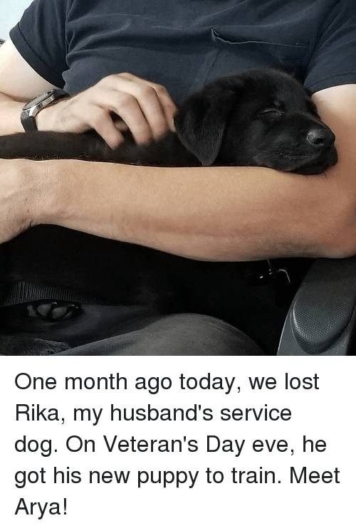 Lost, Puppy, and Today: One month ago today, we lost Rika, my husband's service dog. On Veteran's Day eve, he got his new puppy to train. Meet Arya!
