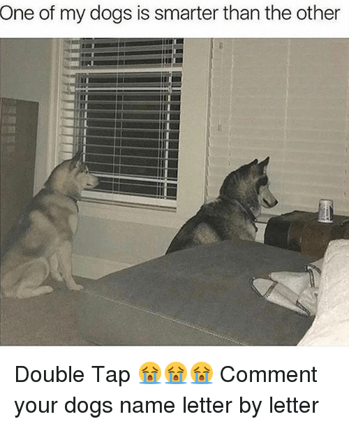 Dogs, Memes, and 🤖: One  of my dogs is smarter than the other Double Tap 😭😭😭 Comment your dogs name letter by letter