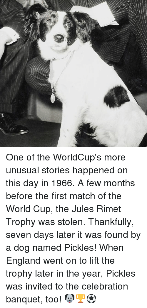 Memes, 🤖, and Seven: One of the WorldCup's more unusual stories happened on this day in 1966. A few months before the first match of the World Cup, the Jules Rimet Trophy was stolen. Thankfully, seven days later it was found by a dog named Pickles! When England went on to lift the trophy later in the year, Pickles was invited to the celebration banquet, too! 🐶🏆⚽️