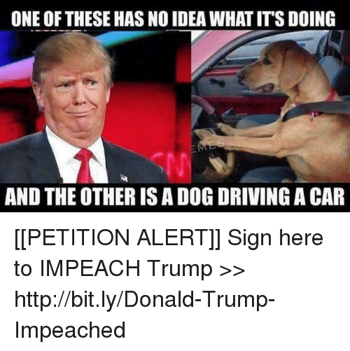 Donald Trump, Driving, and Memes: ONE OF THESE HAS NO IDEA WHAT IT'S DOING  AND THE OTHER IS A DOG DRIVING A CAR [[PETITION ALERT]] Sign here to IMPEACH Trump >> http://bit.ly/Donald-Trump-Impeached