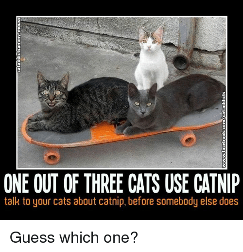 one out of three cats use catnip talk to your 25776923 one out of three cats use catnip talk to your cats about catnip